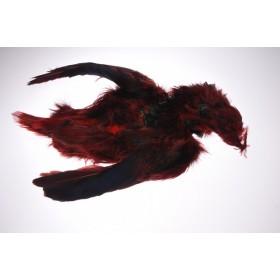Golden Pheasant Bodyskin Orange/Red (guldfasan komplet skind)